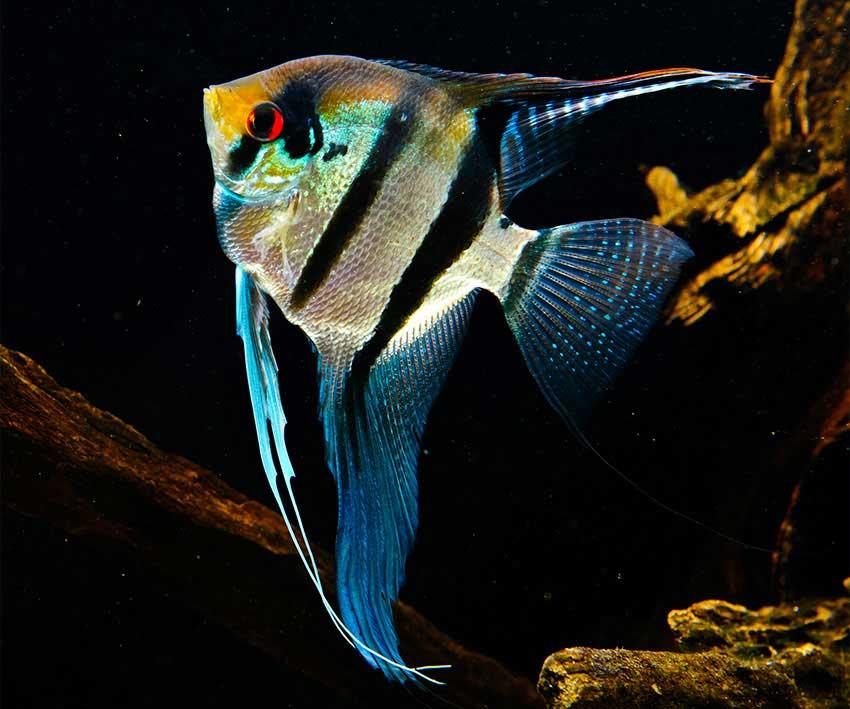 homepage-5-fish